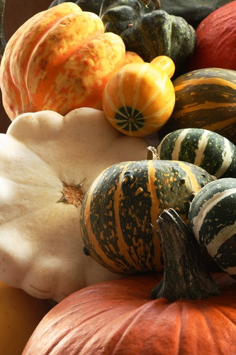 A great variety of squashes photo by Vicki Gardner