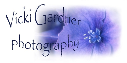 Vicki Gardner Photography